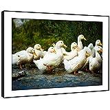 BFA422E incorniciata immagine della parete stampe d'arte - (Stormo di bianco Oche Acqua Stagno) Animal Modern Living Room Camera Pezzo Home Decor Guida Facile Hang (87X61cm)
