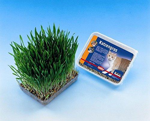 1 kg Katzengras (10 x 100 g) zum selbst Ziehen Saatgut mit Saatschale