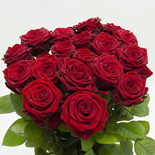 20 Rosso Rose in Colorati,ca 50 fino 60cm appena da Giardiniere,molto bene adatto come da San valentino/Festa della mamma,molto elegante Fiori di campo,Simbolo di Amore,Freude e Giovanile,fiori,