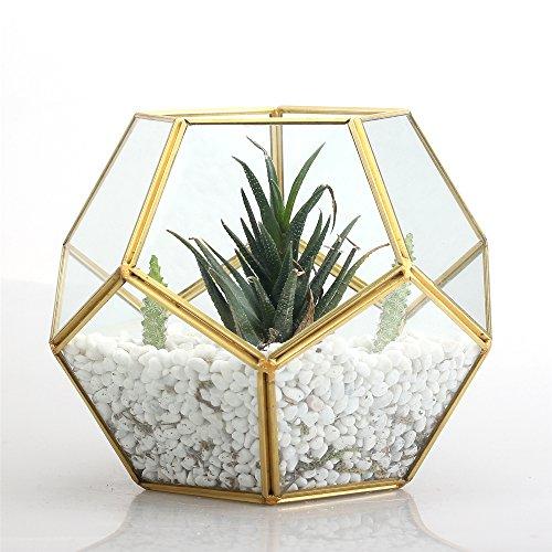 Oro Rame Ottone da tavolo geometrico Pentagono a forma di palla Open Felce Muschio Piante Piante vetro vaso terrario, Box 17,5x 17,5x 15cm regalo di natale