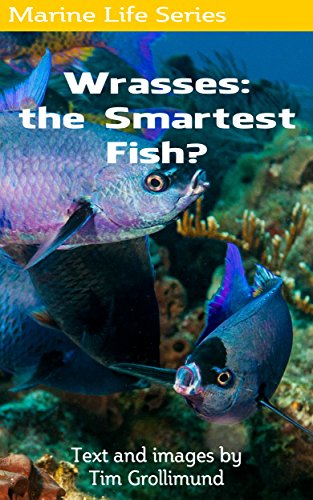 Wrasses: the Smartest Fish? (English Edition) eBook: Grollimund ...