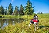 Petacc Hunde Life Jacket Hunde Warnweste