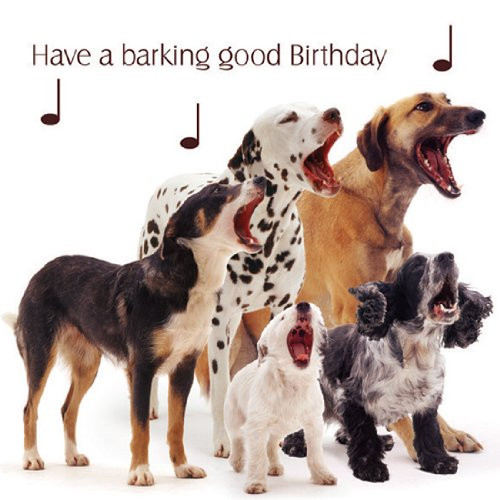 Animal Birthday Cards Amazoncouk – Sound Birthday Cards Uk