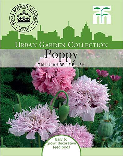 Thompson & Morgan Urban Garden Blumen Poppy Tallulah Belle Blush 300 Samen - Urban Blush