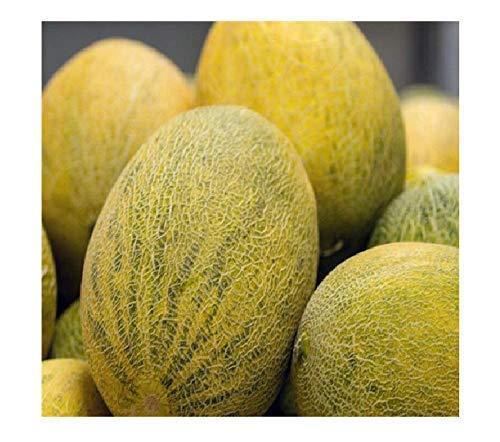 10 gigante eléctrico melón semillas F1 planta fruta saludable jardín #318
