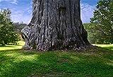 YongFoto 2,2x1,5m Vinyl Foto Hintergrund Alter großer Alter Baumstamm Baumwurzel Wiese des grünen Grases Bäume Fotografie Hintergrund Backdrop Fotostudio Hintergründe Requisiten