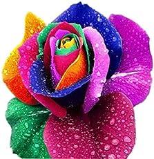 AQUATICA ENTERPRISES 10 Rare Rainbow Rose Perennial Flower Seeds for Garden Decor
