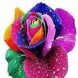 #8: AQUATICA ENTERPRISES 10 Rare Rainbow Rose Perennial Flower Seeds for Garden Decor