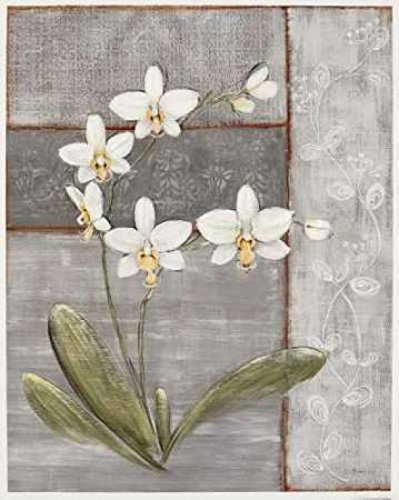 The Poster Corp O. Braun - Orchid Shimmer II Kunstdruck (50,80 x 60,96 cm) -