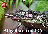 Alligatoren und Co. (Wandkalender 2019 DIN A3 quer): Die intelligentesten und größten Ur-Echsen unserer Erde (Geburtstagskalender, 14 Seiten ) (CALVENDO Tiere)