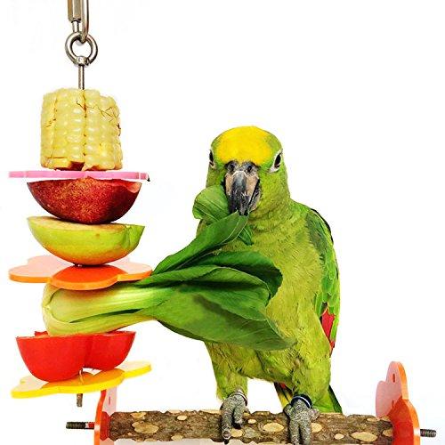 Bwogue Vogel Spieß, Vogel & kleine Tiere Edelstahl Obst Gemüse Halter für Käfige, groß (Für Reise-vogel Papageien Käfige)