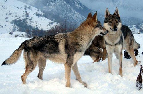 La Principessa dei randagi    The Princess of stray dogs (Vita da Cani   Dog's Life Vol. 1) (Italian Edition)