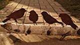 Edelrost Vögel mit Schraube zum Eindrehen in Holz 4 Vögel Metall
