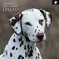 The Gifted Stationery 2020 Wall Calendar - Dalmatians Design (GSC19492)