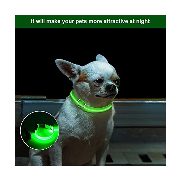 ZeWoo USB Rechargeable LED Dog Safety Collar + LED Dog Lead/Leash - Great Visibility & Improved Safety 3