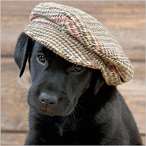photographic-greeting-card-aba7867-blank-birthday-labrador-puppy-in-a-cap