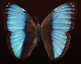 Livre en ligne pdf Le secret des papillons