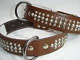 LEDER HALSBAND - Hundehalsband, NIETEN Braun, Halsumfang 51-65cm, NEU (PL.03-05-7-14)