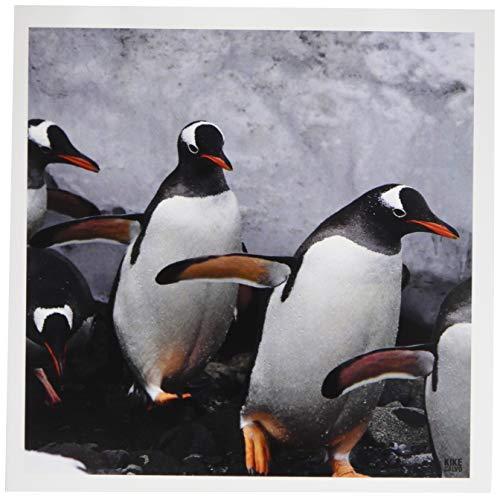3drose Gentoo Pinguin Schritt aus dem Einfrieren Wasser nach rund um aitcho Inseln-Grußkarten, 6von Foto, Set 6(GC 10505_ 1) (Einfrieren Wasser)