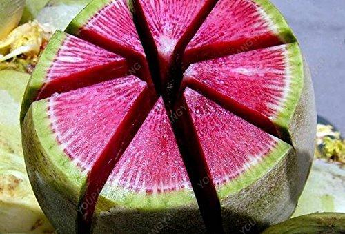 100pcs Beauté Radis coeur graines de carotte fruits en pot bio santé Sementes végétales comestibles pour le bricolage jardin Plantation