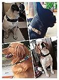 Hundehalsband mit Name Gravur Personalisierte Hunde Haustier Echtes Leder Halsband Haustiername und Telefonnummer Marke Schwarz - 3