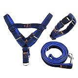 Andre Cowboy Dog ?? Leine Halsband Set Teddybär Xiong Bomei Kleiner und mittlerer Hund Dog Rope Gold Haarige Tierhaltung Hund Kette Hundekette (Farbe: Blau, Größe: M)