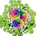 Blumenstrauß mit bunten Regenbogenrosen in Keramikvase - Echte Blumen! von Blumenversand Rosenbote auf Du und dein Garten