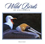 Wild Birds of California (Companion Press)