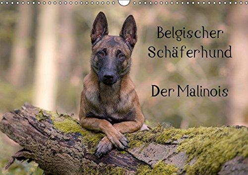 Belgischer Schäferhund - Der Malinois (Wandkalender 2019 DIN A3 quer): Die Facetten einer Hunderasse (Monatskalender, 14 Seiten ) (CALVENDO Tiere)