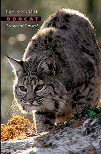 bobcat-master-of-survival-by-kevin-hansen-2006-12-21
