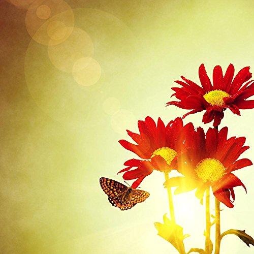 Pitaara Box Red Flowers & Butterfly Under Bright Sunny Sky Peel & Stick Vinyl Wall Sticker 49.3 X 49.3Inch -