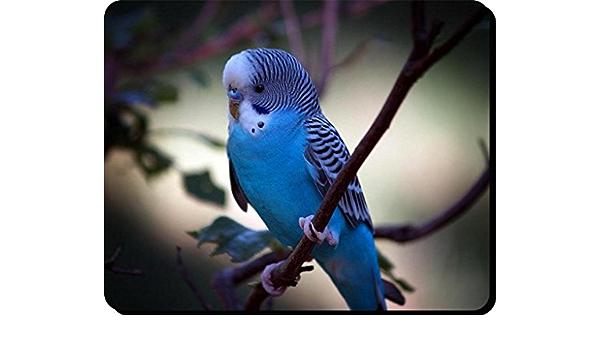 Mauspad aus der Edition Colibri Australien budgeridar Wellensittich
