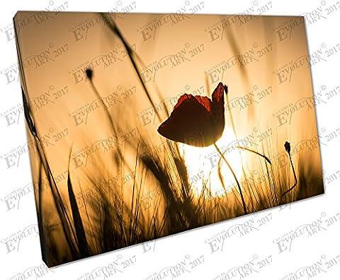 Impression sur toile Sun Setting Over Wild Poppy - 30 x 20 x Depth 2cm