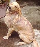 Caniderm-V, Nahrungsergänzung, für Hunde, bei Hautproblemen, Milben, Ekzemen, Allergien (Einzelpackung) - 4