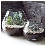 Set di 2 Vasi / Portacandela / Coppe Terrarium Piante Aeree Decorativi Moderni Rotondi in Vetro Trasparente
