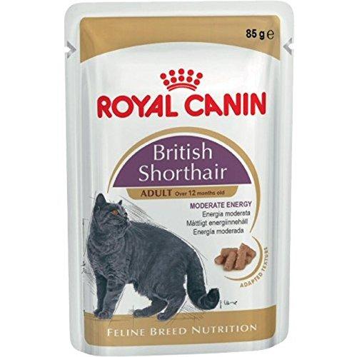 ROYAL CANIN ish Shorthair, 1er Pack (1 x 1.02 - British Katzenfutter Kurzhaar