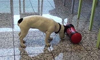 PIPOLINO Noir et Rouge distributeur mobile de croquettes pour le bien-être et santé des chiens