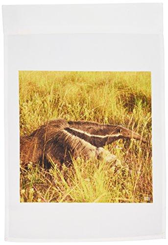 3dRose FL_37634_1 Giand Anteater.EL Pantanal/Wetlands/Matto Grosso/Brasilien Gartenflagge, 30,5 x 45,7 cm (Brasilien-flag Shirt)