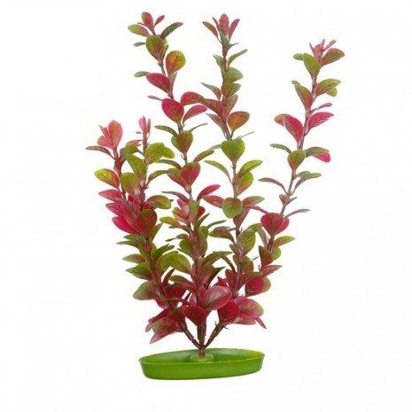 planta-ludwigia-50cm