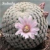 100 Stück Echte Kakteensamen, Mini-Kaktus, Feigenkaktus, japanisch Succulents Bonsai Blumensamen, Topfpflanze für Hausgärten-8
