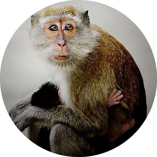 Monkey rund Mousepad Mauspad tolle Geschenkidee Monkey Telefon