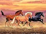 Royal Langnickel Malen nach Zahlen Pferde