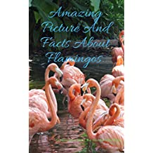 Amazing Picture And Fact About Flamingos. (The Animal Kids' Book Series Book) (English Edition)