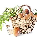 Portal Cool 2: Neue Essbare Gesundheit Gemüse Pilz Samen Pilzmyzel Spores Spawn C5 01