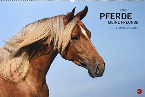 Pferde - Meine Freunde - Kalender 2019