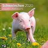 Schweinchen 2020, Wandkalender / Broschürenkalender im Hochformat (aufgeklappt 30x60 cm) - Geschenk-Kalender mit Monatskalendarium zum Eintragen