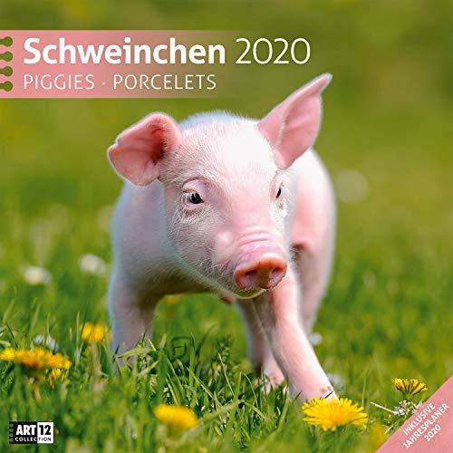 Schweinchen 2020, Wandkalender / Broschürenkalender im Hochformat (aufgeklappt 30x60 cm) - Geschenk-Kalender mit Monatskalendarium zum Eintragen (Schwein Terminkalender)