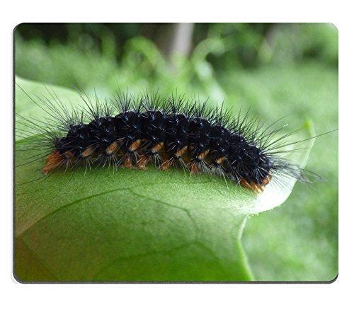 jun-xt-tapis-de-souris-starr-150602-0089-delairea-odorata-odorata-secusio-extensa-larve-sur-feuille-
