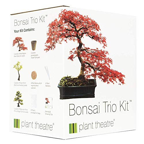 Plant Theatre - Bonsai Trio, Kit per la Coltivazione di 3 Bons