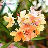 Bestselling! 100pcs Bunte Oleander New Seeds Schöne Blumensamen Die Budding Rate 95% Gartenpflanze für Kind-Geschenk